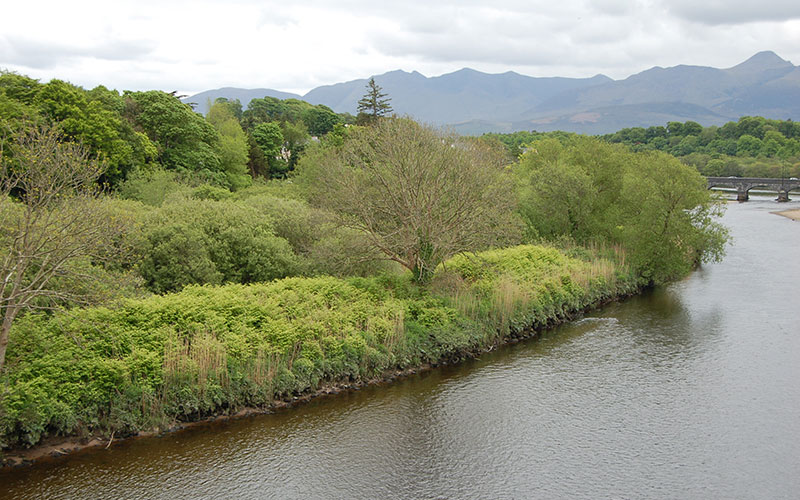 Japanese Knotweed Ireland - The River Laune in Killorglin Co Kerry